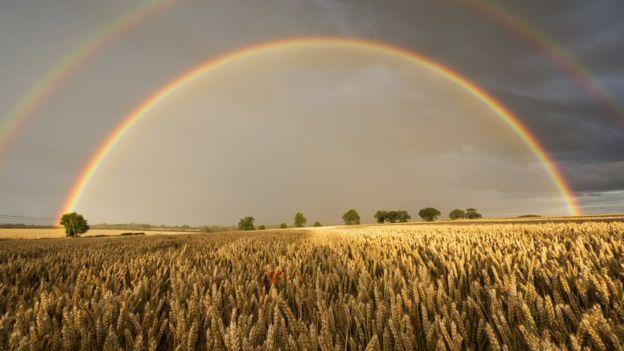 En las regiones demasiado frías o secas para que crezca el arroz, el dorado trigo es rey. GETTY IMAGES