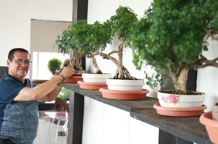 Carlos Augusto Galindo muestra algunos de los árboles en miniatura que tiene en su casa en Mazatenango. (Foto Prensa Libre: Cristian Soto).