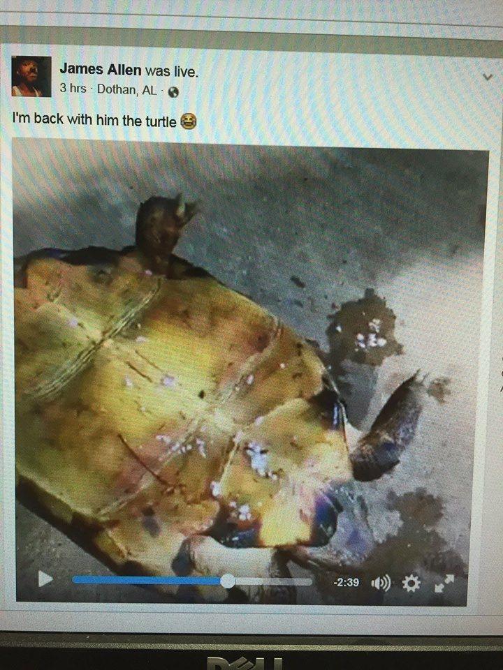 La tortuga fue quemada por su dueño. (Foto Facebook/Dothan Police Department).