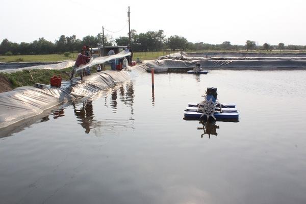 Recolecta tres cosechas al a o for Aireadores para estanques piscicolas