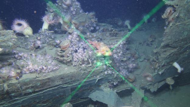 Hay más de 2.000 barcos hundidos en el golfo de México. Esta imagen es del naufragio del Vioska Knoll en el Golfo de México. BOEM