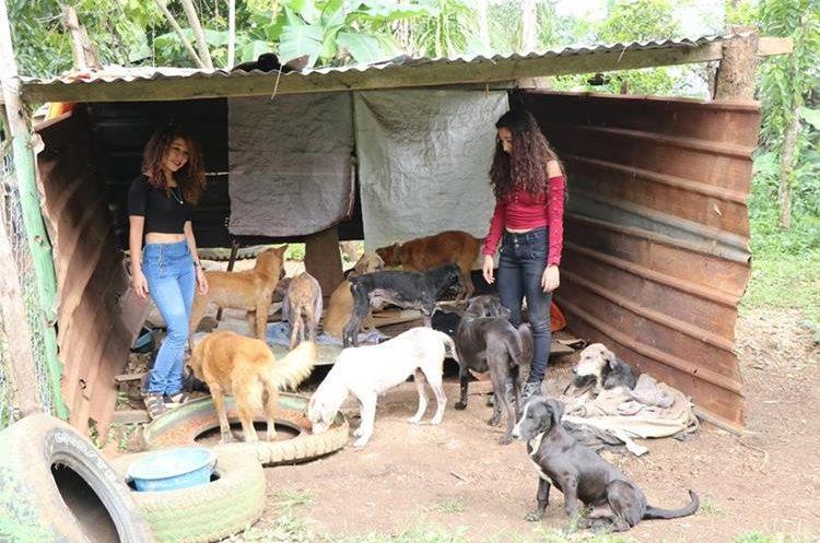 Los perros maltratados reciben atención especial. (Foto Prensa Libre: Rigoberto Escobar).