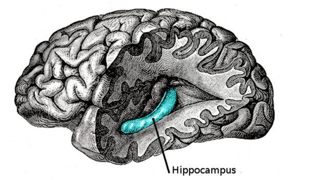 Recientemente fue desentrañado lo que sucede cuando hacemos y almacenamos recuerdos en un descubrimiento que sorprendió incluso a los científicos que lo hicieron. El cerebro hace dos copias de la memoria: una para el aquí y ahora, y otra para toda la vida. HENRY VANDYKE CARTER