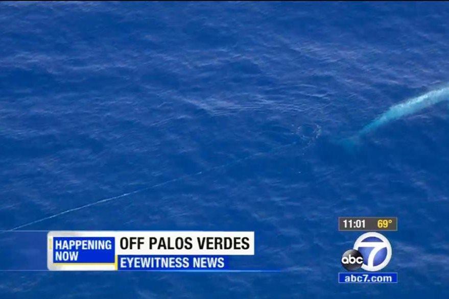 Esas islas están justo frente a Tijuana y a más de 160 kilómetros de donde la ballena fue vista por última vez el viernes reciente. (Foto Prensa Libre: AP).
