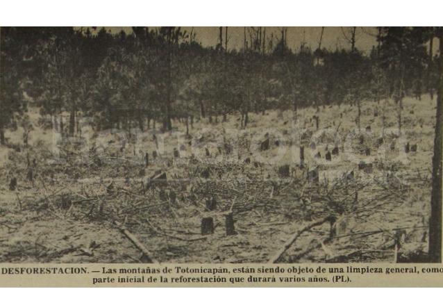 Áreas boscosas ya taladas para evitar la propagación de la plaga en marzo de 1979. La reforestación toma varios años.  (Foto: Hemeroteca PL)