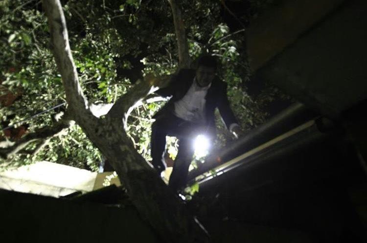 Diputado Ernesto Galdámez trepó a un árbol