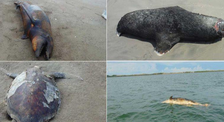 Aparecen 21 delfines muertos en una isla del Mar de Cortés, México.