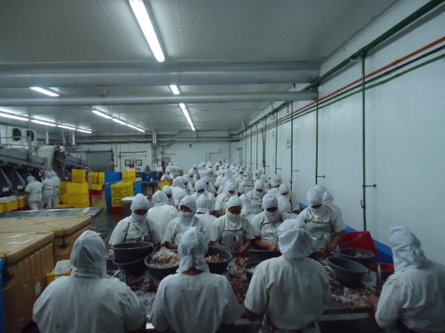 Plantas exportadoras de camarón instaladas en el país no pueden importar materia prima de Ecuador, pese a que hay una relación comercial. (Foto Prensa Libre: Cortesía)