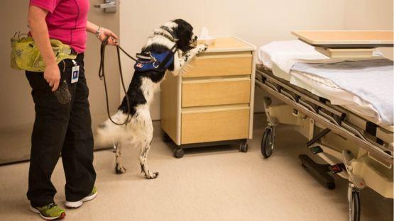 Zurberg planea entrenar a otros perros que puedan ser utilizados en otros hospitales del mundo.  VANCOUVER COASTAL HEALTH