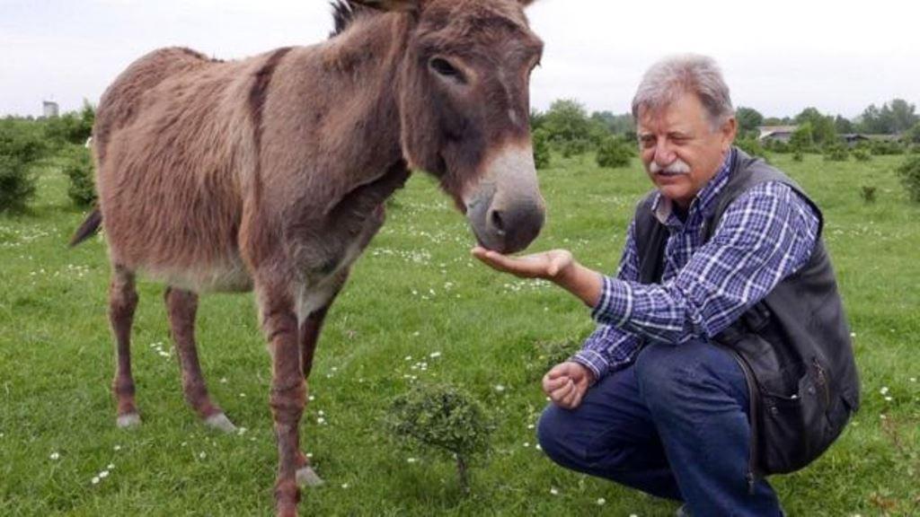 Los burros pasaron de ser maltratados a valiosos para la producción local. KRISTIN VUKOVIC