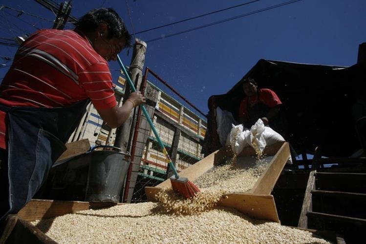 El maíz blanco es uno de los principales alimentos de los guatemaltecos. (Foto Prensa Libre: César Pérez)