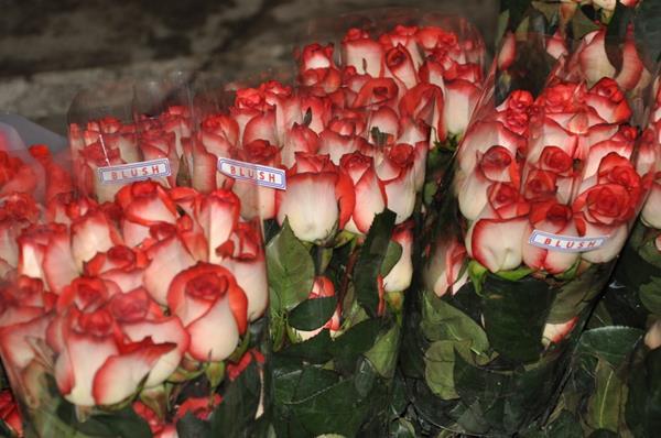 """Exportación de flores aumenta en mayo, en especial la variedad de """"Labios de Mujer"""". (Foto Prensa Libre: Cortesía)"""
