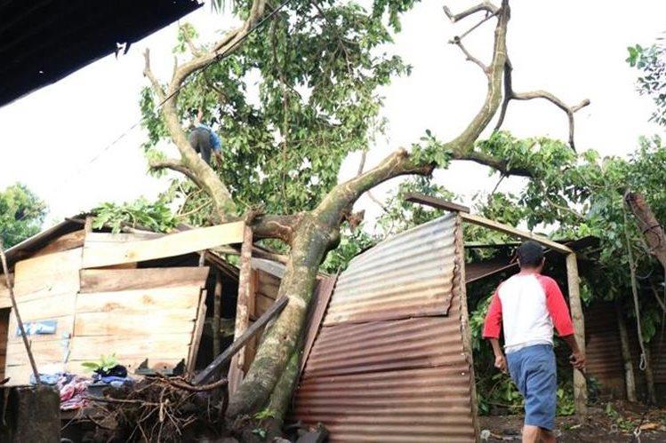 La casa de la familia Tupul, en en Las Flores, zona 3 de Mazatenango, fue dañada por un árbol. (Foto Prensa Libre. Cristian Soto)