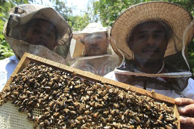 Otto Rosales Aldana —derecha—, productor de miel de Cuilapa, Santa Rosa, explica el proceso para la extracción de miel. Con su esposa, Glenda Ramírez, lleva una década en el cuidado de abejas. (Foto Prensa Libre: Carlos Hernández)