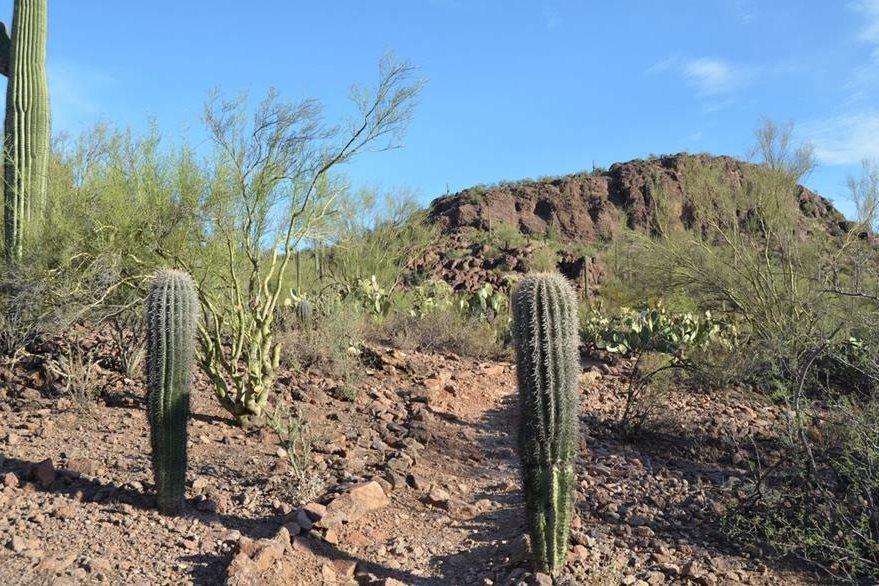 Vista del desierto de Arizona que cada año se cobra la vida de decenas de indocumentados que buscan llegar a Estados Unidos. (Foto Prensa Libre: AP).
