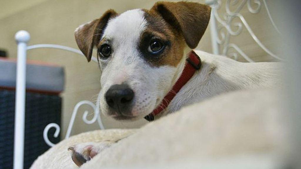 Los perros reconocen palabras concretas y la entonación, según expertos. (GETTY IMAGES)