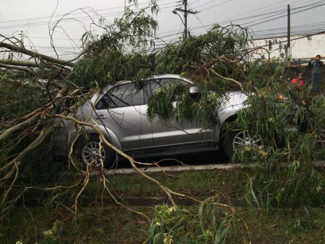 Un árbol cayó sobre un vehículo en el bulevar principal de Ciudad San Cristóbal. (Foto Prensa Libre:(@DDeyvid_)