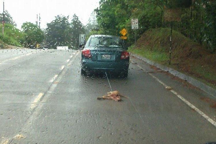 Un testigo vio que el vehículo recorrió por lo menos un kilómetro y medio llevando arrastrado el cadáver del animal.