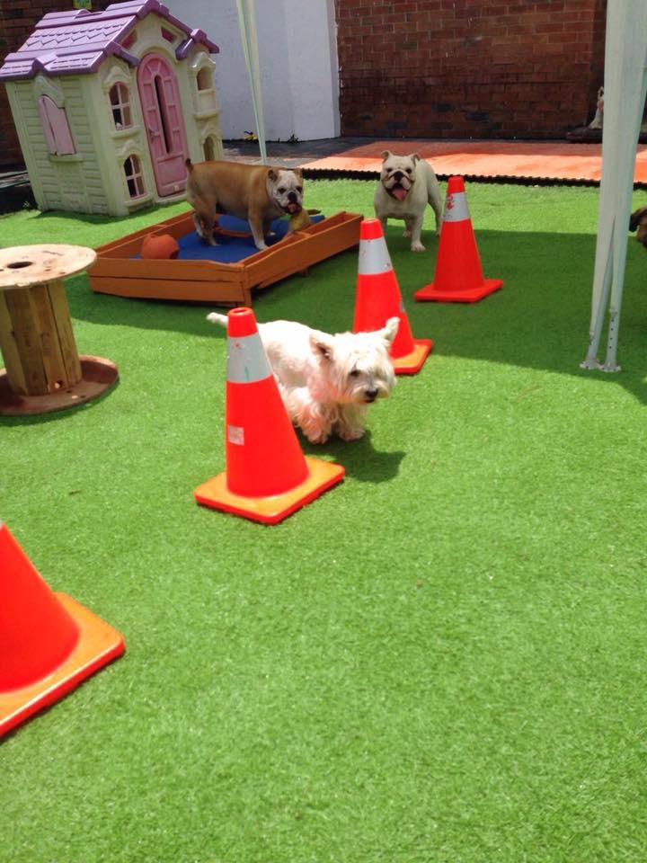 Todos los días de 11 a 13 horas los perros juegan en un jardín de obstáculos con atención personalizada. (Foto Prensa Libre: Erick Cruz Hotel & Daycare).