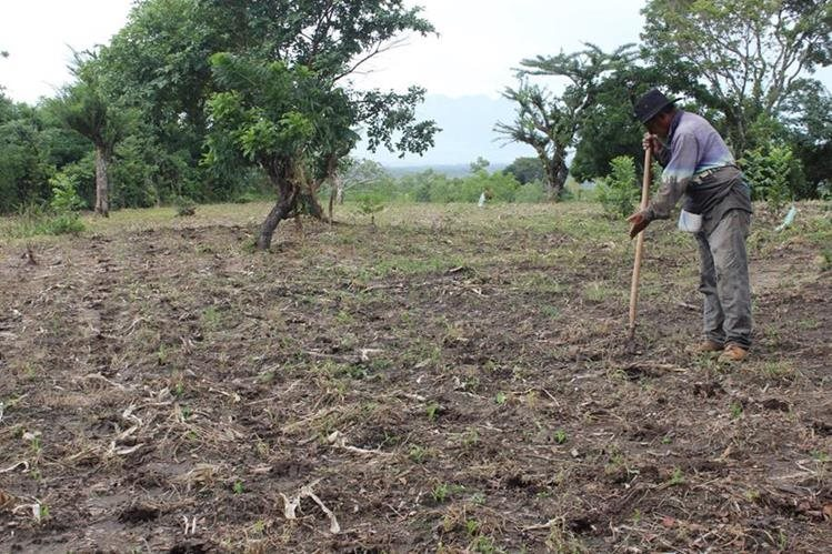 Campesinos pueden perder cultivos si siembran en la fecha acostumbrada, por falta de lluvia. (Foto Prensa Libre: Hemeroteca PL)