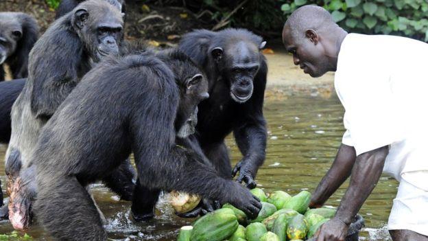 Para el experto, los investigadores tienen una responsabilidad con los animales que utilizan para sus experimentos. GETTY IMAGES