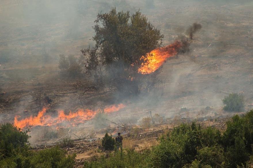 Los incendios son catalogados como los peores en la historia de Chile. (Foto Prensa Libre: AFP).