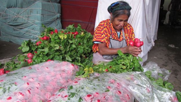 Los rábanos son también un producto de exportación de Almolonga.