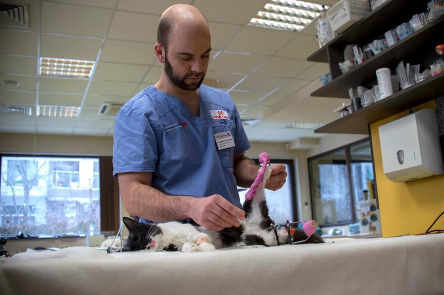 """Vladislav Zlatinov examinando el gato """"Steven"""" antes de la operación. (AFP)."""