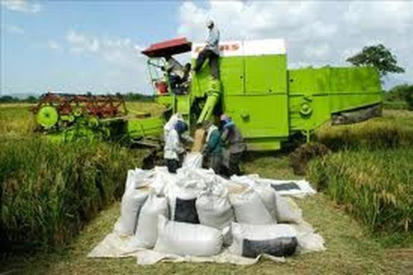 <p>Las autoridades de Brasil esperan tener un nuevo récord de cosecha de granos entre este y el próximo año.</p>