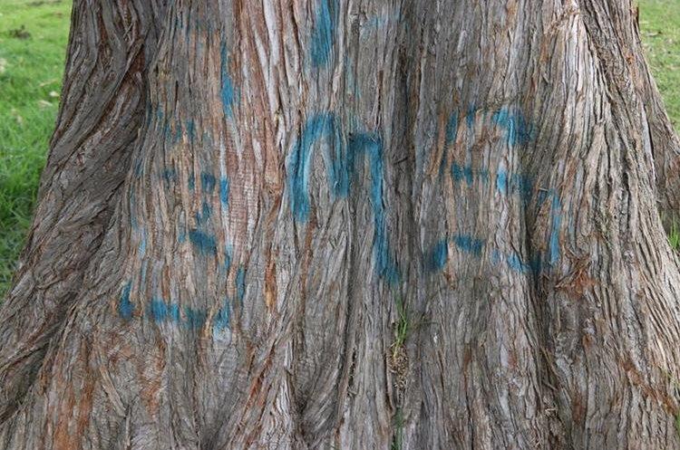 Este es el mensaje en uno de los árboles que está ubicado cerca del lugar en donde se encontró el cadáver del joven. (Foto Prensa Libre: María Longo)