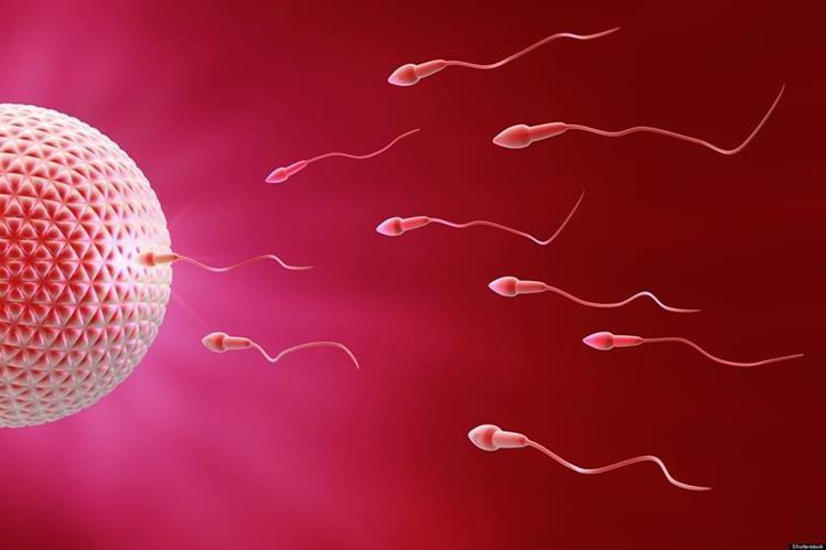 Una de las principales causas de la infertilidad masculina es la incapacidad de crear células germinales en los testículos.