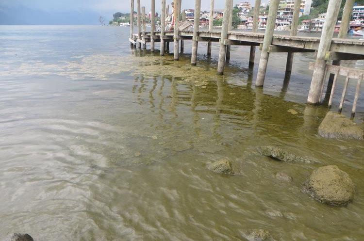 A orillas del Lago de Atitlán crecen algas debido a la contaminación. (Foto Prensa Libre: Ángel Julajuj)