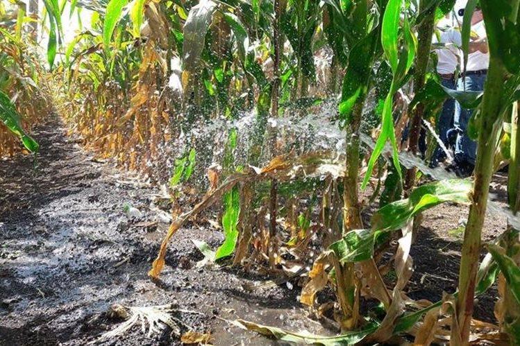 Prueba del sistema de riego que será implementado en San Manuel Chaparrón, Jalapa. (Foto Prensa Libre: Hugo Oliva).
