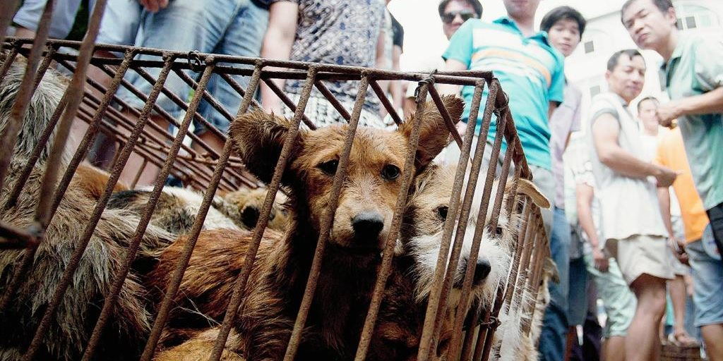 Los defensores de los animales, acallados por el festival chino de ...