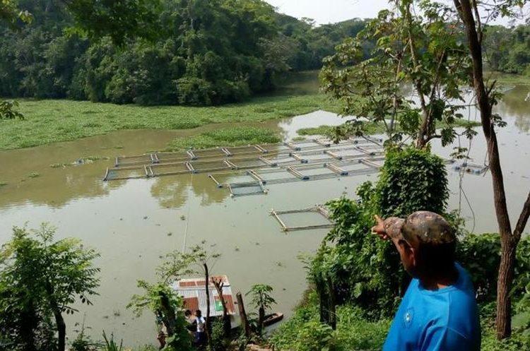 Delegados de la PDH llegaron a verificar la situación de la mortandad de peces en la laguna artificial. (Foto Prensa Libre: Cortesía PDH)