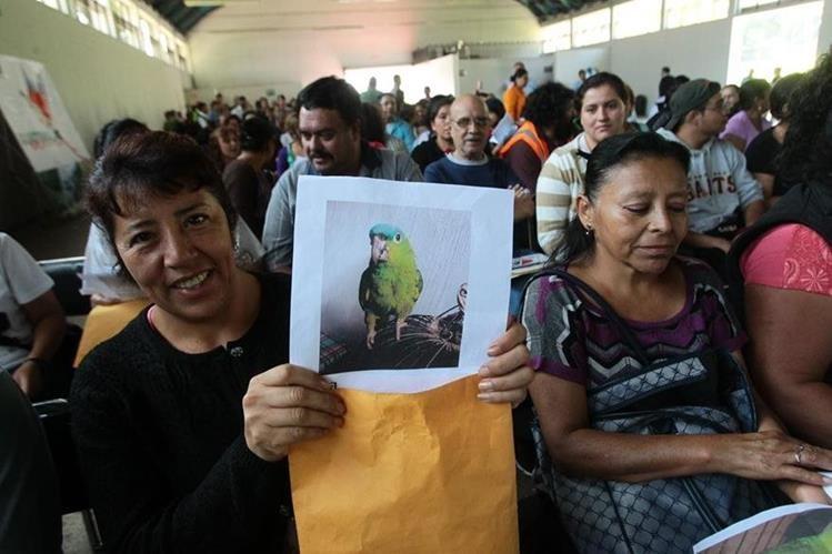 Decenas de personas acuden a registrar especies silvestres al Conap. (Foto Prensa Libre: Hemeroteca PL)