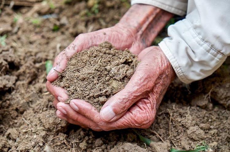 Con la pérdida de suelo agrícola se pone en riesgo la seguridad alimentaria de miles de personas. (Foto Hemeroteca PL)