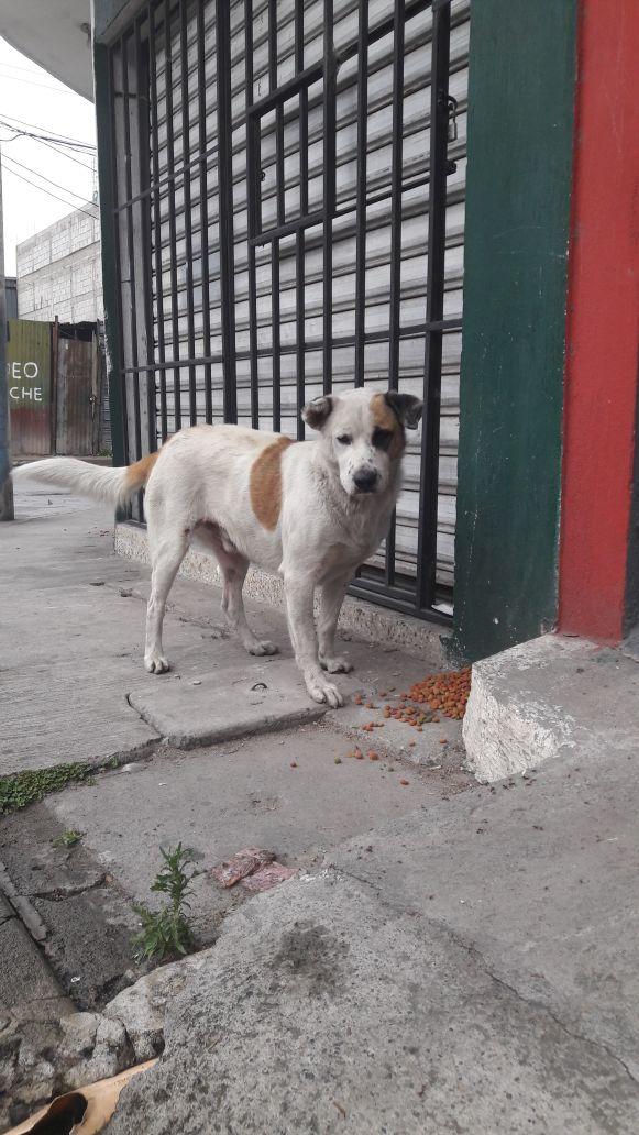 Un perro aprovecha uno de los comedores en Villa Hermosa, San Miguel Petapa. (Foto Prensa Libre: Jhon Monsalve)