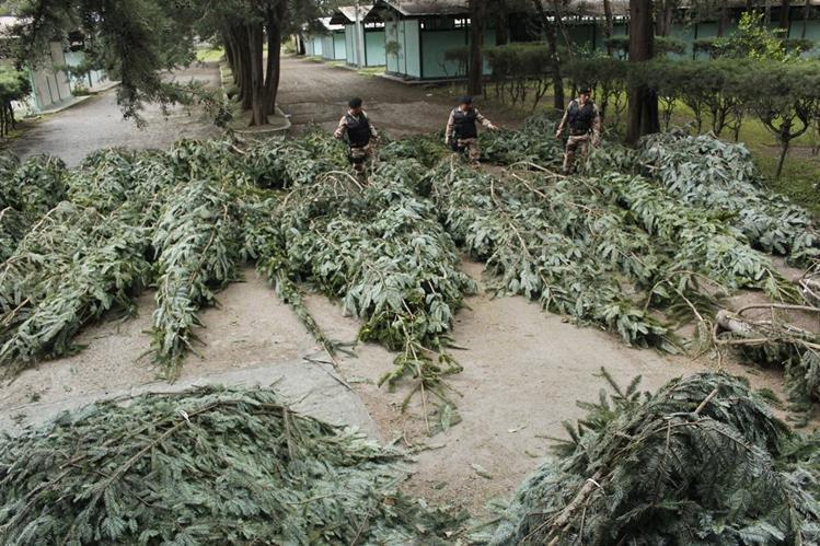 Agentes de la División de Protección a la Naturaleza (Diprona) verifican una incautación. (Foto Prensa Libre: Hemeroteca PL)