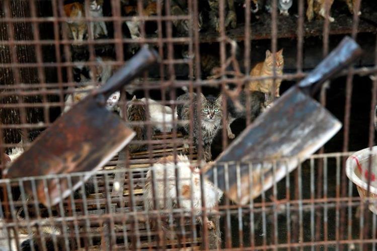 Mercado de carnes en Yulin, China. (Foto Prensa Libre: AP)