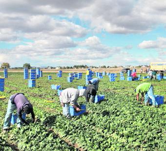 Inmigrantes soportan largas jornadas laborales en EE. UU. (Foto Hemeroteca PL).