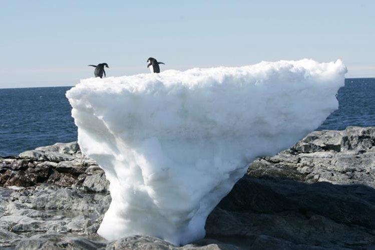 La vida vegetal de la Antártida crece debido al cambio climático. Foto Prensa Libre: EFE.
