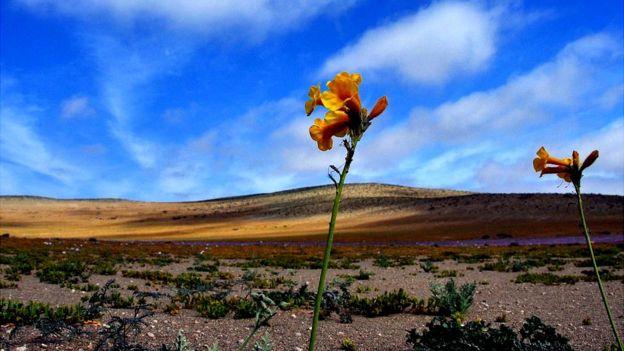 El desierto de Atacama, en Chile, es uno de los lugares que ha fascinado a Cees Nooteboom. (ARIEL MARINKOVIC/GETTY IMAGES)