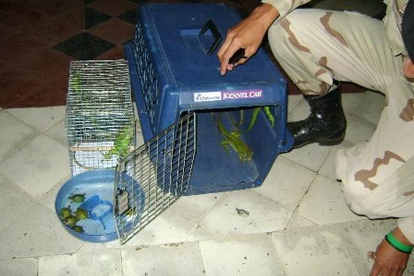 <p>Especies rescatadas por Diprona y Conap. (Foto Prensa Libre: PNC)</p>
