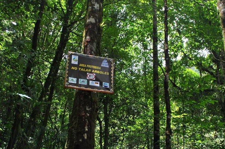 """<span style=""""font-family: arial, sans-serif; font-size: 12.8px; text-align: justify;"""">El bosque latifoliado tiene gran variedad de especies de fauna y flora, las cuales están en peligro de extinción. PRENSA LIBRE/ MARIO MORALES</span>"""