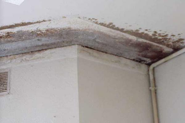 Cómo eliminar manchas de humedad de las paredes?