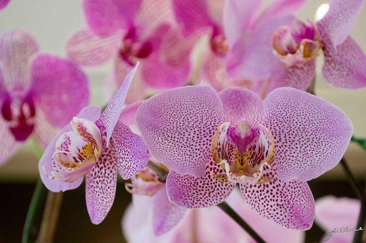 La XLII Exposición Nacional de Orquídeas busca incentivar a la niñez y a la juventud (Foto Prensa Libre: Jaime Carrillo)