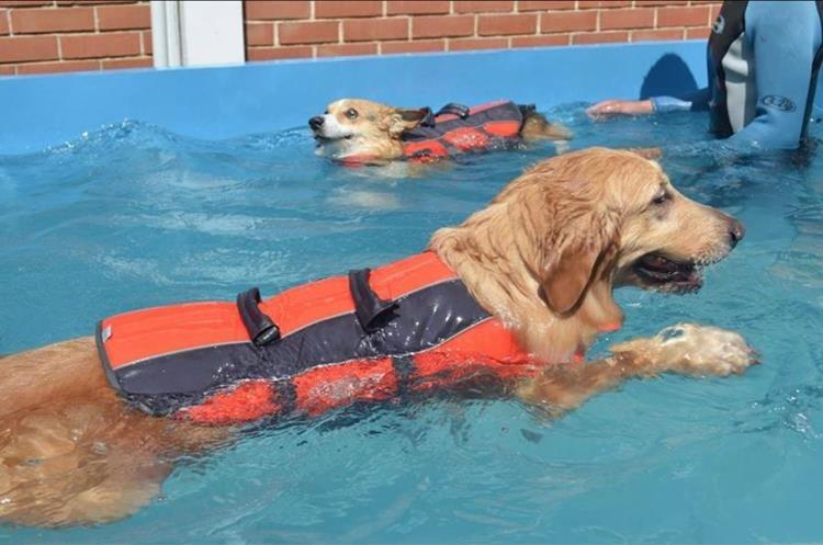 Los perros de Mascotas Terapeutas son sometidos a un proceso de entrenamiento. (Foto Prensa Libre: Cortesía Mascotas Terapeutas)