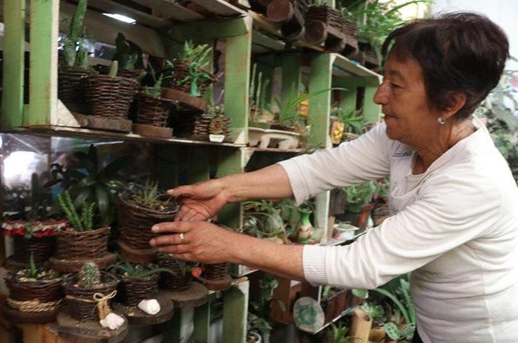 El vivero ambiental de materiales reciclables almacena unas 400 plantas ornamentales. (Foto Prensa Libre: Whitmer Barrera)