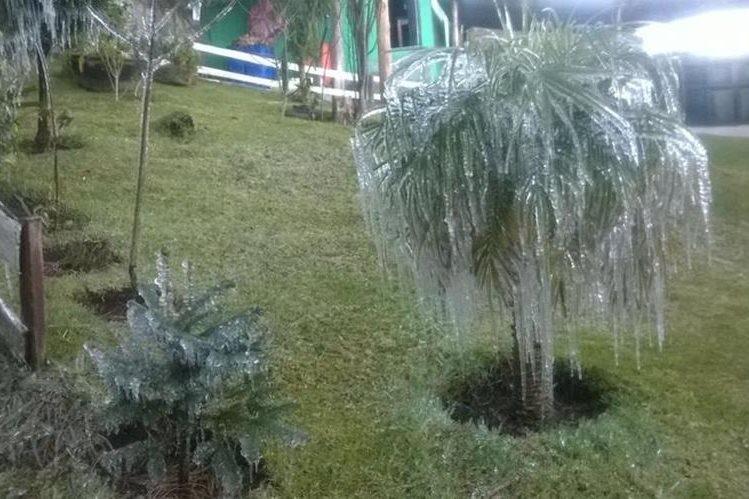 Frío en Cantel, Quetzaltenango, causó que se formara hielo y escarcha en cultivos. (Foto Prensa Libre: Cortesía Jaime Soc)
